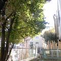 写真: 本照寺-04墓地a
