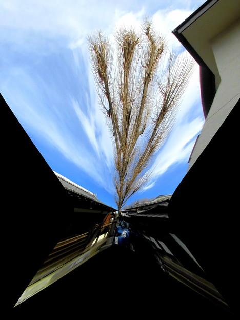 写真: 日夜山正徳寺-04b
