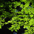 写真: 壇上伽藍の自然