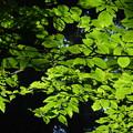 Photos: 壇上伽藍の自然