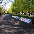 Photos: 桜理祭