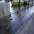 Photos: 新月島川