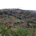 写真: 長浦町段々畑