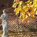 フランス庭園の黄葉
