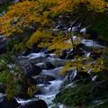 渓流~紅葉