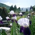 写真: 黒部立山旅行 097