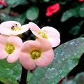 緑化植物園の花-3