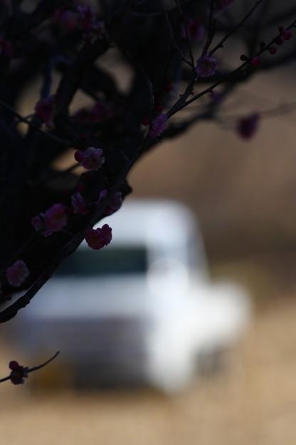 軽トラのある風景 梅の頃に
