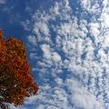 Photos: 紅葉と、空と雲