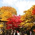Photos: 古峯神社の紅葉