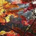 高野山紅葉10