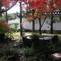 写真: 晩秋好古園32