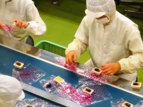 写真: 信玄餅工場