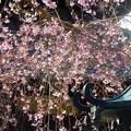 本覚寺~鎌倉