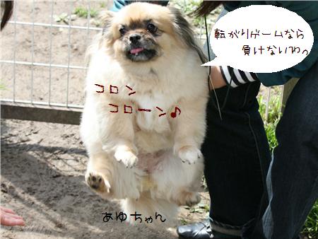 あゆちゃん