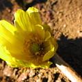 Photos: きれいな黄金色