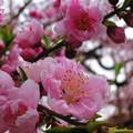 写真: 咲き乱れ・・・