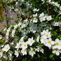 写真: 咲き誇る・・
