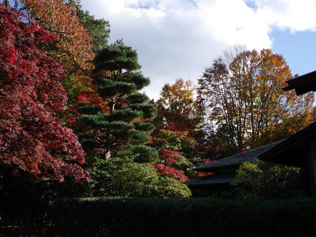 Photos: お茶会の会場