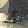 Photos: 初雪の夜