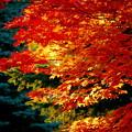 中島公園の秋