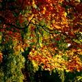 中島公園の秋 03