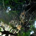 写真: 蜘蛛6