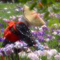 写真: 花摘みの女
