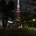 Photos: キバナコスモスと東京タワー