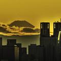 都庁と富士