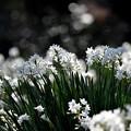 写真: ホワイトペッパー