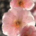 早春 (2)