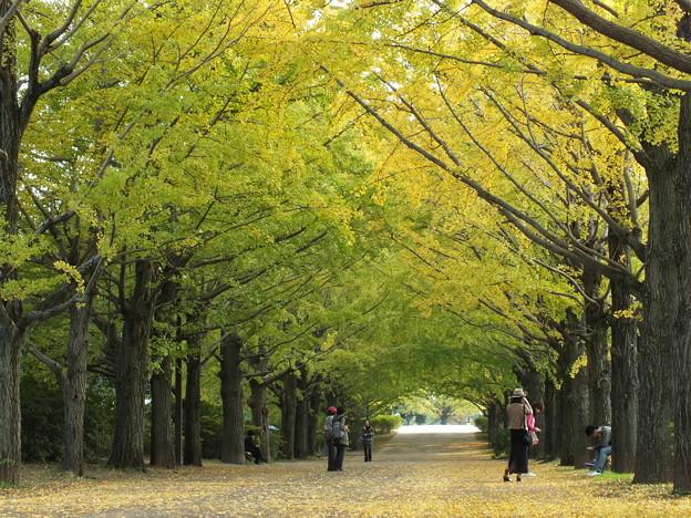 昭和記念公園392