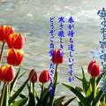 Photos: 寒中5