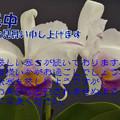 Photos: 寒中7
