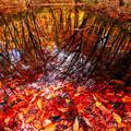 写真: 水鏡面の秋模様