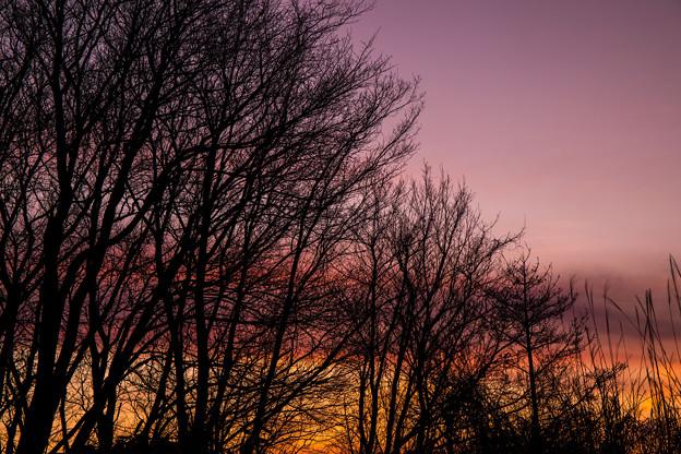 写真: 雀色時