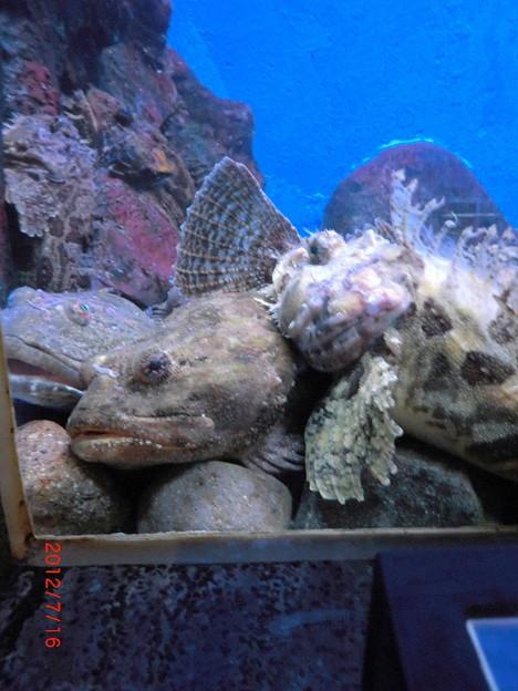 室蘭水族館(2012.7).14
