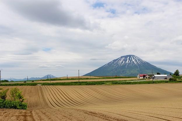 初夏の羊蹄山(2016年) (5)