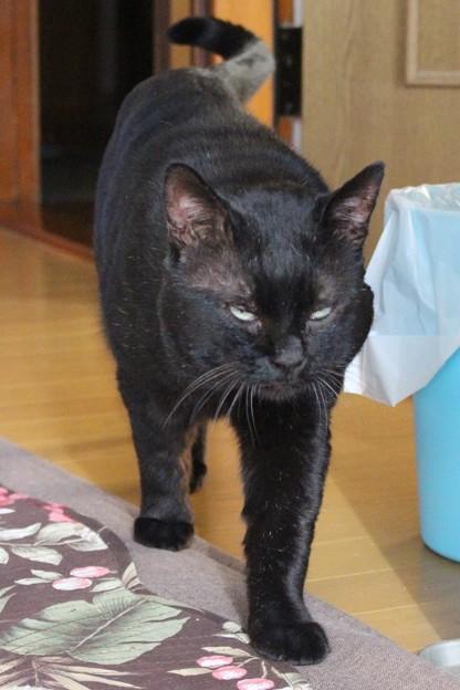 黒猫のクロ(=^o^=) (1)