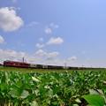 写真: 大豆畑3