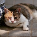 Photos: シゲ子さんも暑そう(w)