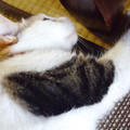 Photos: 何だか変(w)