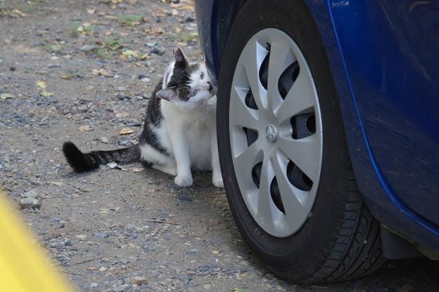 車好きのうし柄ちゃん