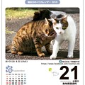 猫友日めくりカレンダー