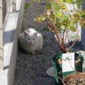 写真: 白猫さん