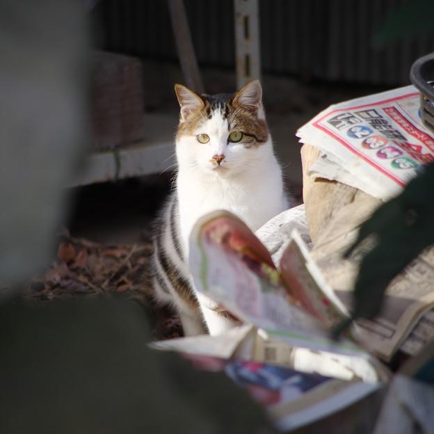写真: お屋敷の猫さん