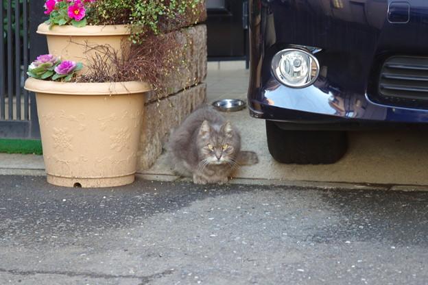 外語大に行く途中で会った猫さん