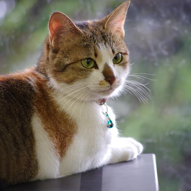 5匹目の火星猫