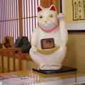 Photos: 川越菓舗「道灌」の招き猫
